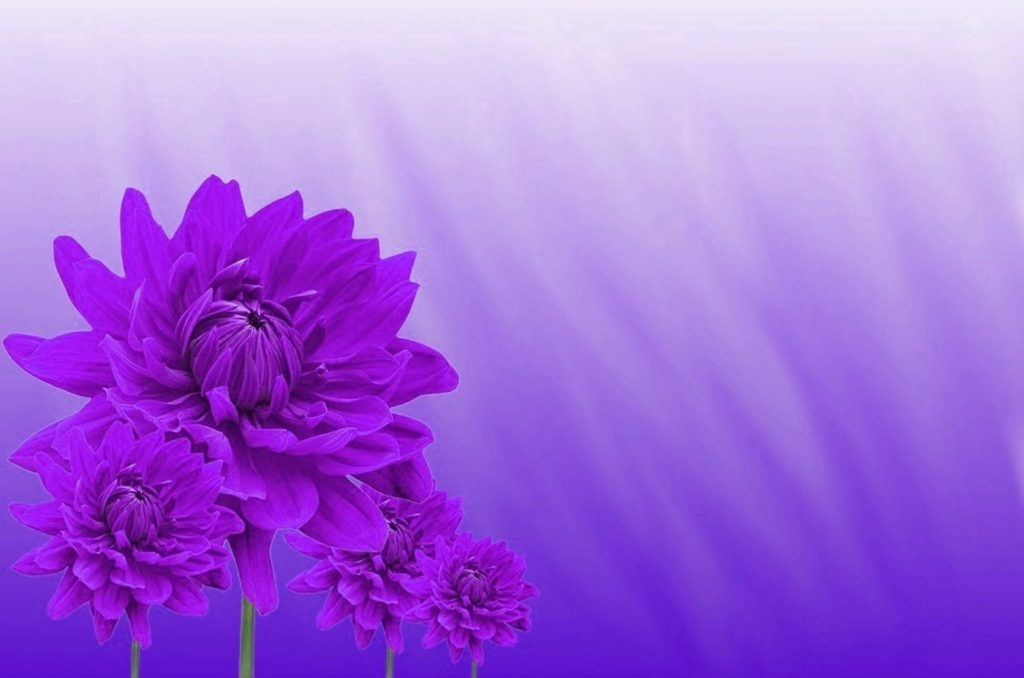 purple colour