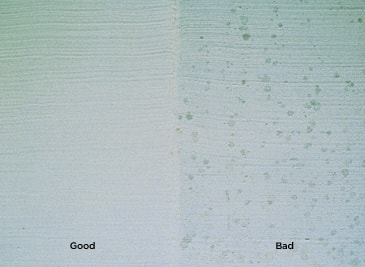 visible mildew spots indicate mould growth photo courtesy of The Paint Quality Institute from the Benjamin Moore website