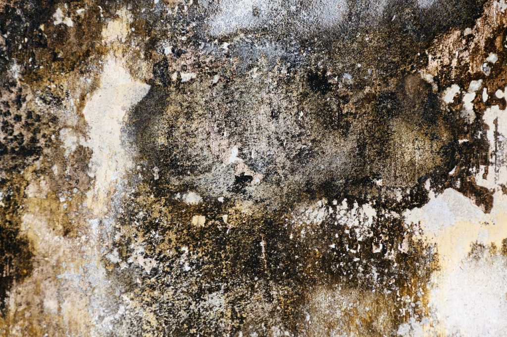 painting over mold and mildew is hazardous to your health